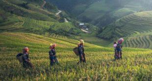 Veganer Urlaub auf Bali – fit und gesund nach Hause zurückkehren